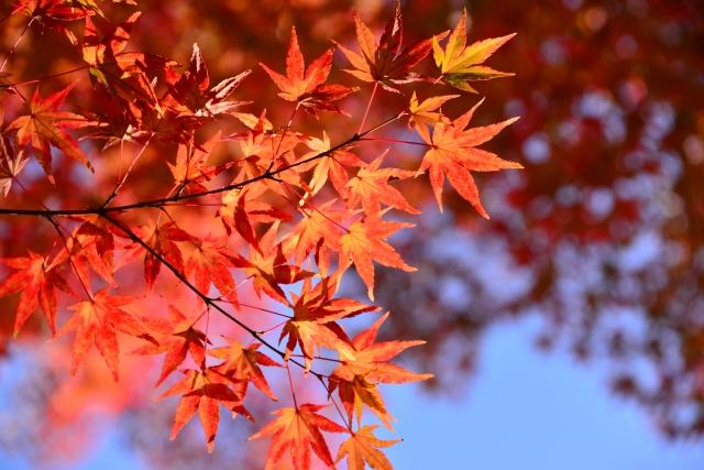 今年の秋冬人気のカラーリングといえば!